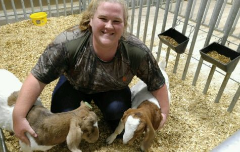Senior Maggie Mohr works with her goats, Wade Ryan and Jacob Marc, in the FFA ag barn.