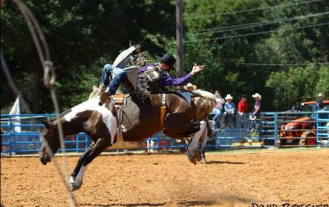 Freshman Gavin French hopes for eight seconds as he hops on the back of a horse at the rodeo.